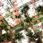 Hanging Flowers at Bellagio Conservatory