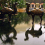 Wynn Macau Reflection Pool